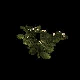PotatoPlant.png