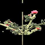 PlantChrysanthemum.png