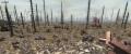 WastelandScreenshot.png