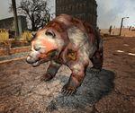 Zombie bear.jpg