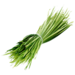 YuccaFibers.png