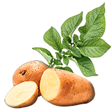 PotatoSeed.png