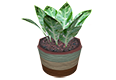Plant02.png