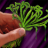 Poison Master Pick Herb Skill Icon.png