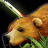 Hunter Searching Skill Icon.png