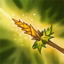 Unfair Advantage Icon.png