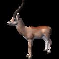 Dorcas Gazelle (Gazella dorcas).png