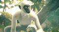 African Green Monkey.png