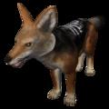 Black-Backed Jackal (Canis mesomelas).png