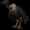 Cinereous Vulture (Aegypius monachus).png