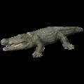 Thorbjarnarson's Crocodile (Crocodylus thorbjarnarsoni).png