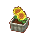 Int 2480 flower1 cmps.png