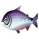 Fish kingsalmon.png