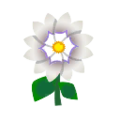 White Dahlias.png