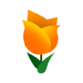 Orange Tulips.png