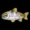 Fish ooiwana.png