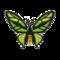Insect Gokurakuageha.png