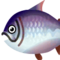 Fish kingsalmon big.png