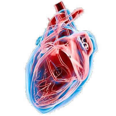 Mod:Ark Eternal Dino Heart - Official ARK: Survival Evolved Wiki