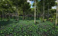 Jungle 11.jpg