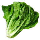 Lettuce (Primitive Plus).png