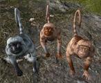 MonkeyASIG.png