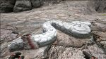 Titanoboa PaintRegion2.jpg