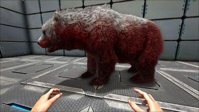 Dire Bear PaintRegion5.jpg