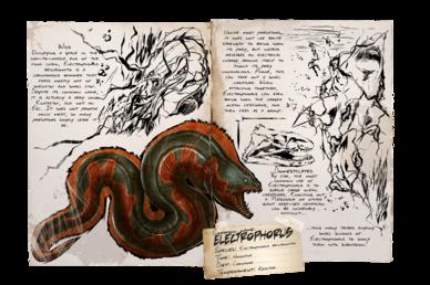 Dossier Electrophorus.png