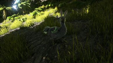 Bunny Dodo Image.jpg