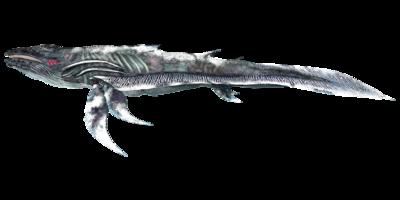 Astrocetus PaintRegion2.png