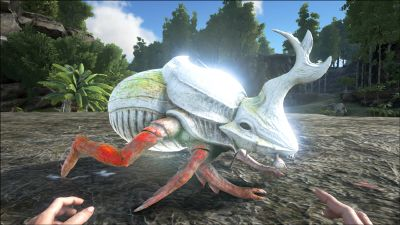 Dung Beetle - Official ARK: Survival Evolved Wiki