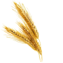 Fresh Wheat (Primitive Plus).png