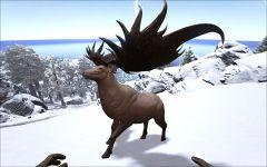 MegalocerosSideView.jpg