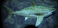 Sharky ASIG.png