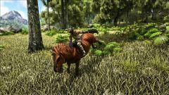 Equus Taming.jpg