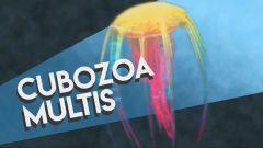 Cubozoa Multis Image.jpg