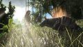 Hyaenodon tamed.jpg