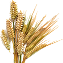 Dried Barley (Primitive Plus).png
