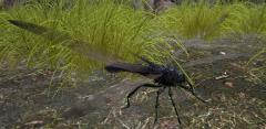 DragonflyASIG.png