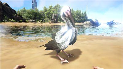 Ichthyornis PaintRegion5.jpg