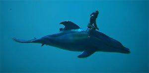 Dolphin Image.jpg