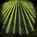Skill Secrets of Farming.png