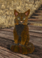 Cat - Brown and red.png