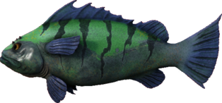 Sea Bass.png