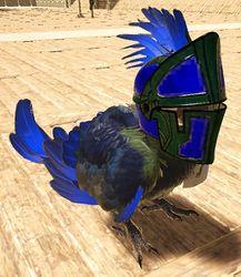 Parrot Wearing Helmet.jpg