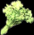 Green Algae.png