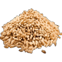 Wheat Seed.png