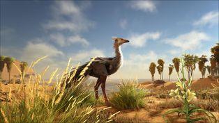 Ostrich Image.jpg