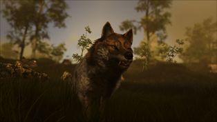 Wolf Image.jpg